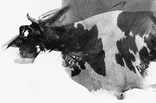 Cow head by Vladas Orzekauskas