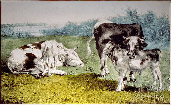 Cows Pasture Vintage Painting  by Heinz G Mielke