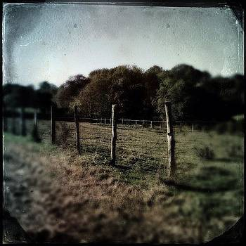 Cow Pasture Fence by Deirdre Ryan