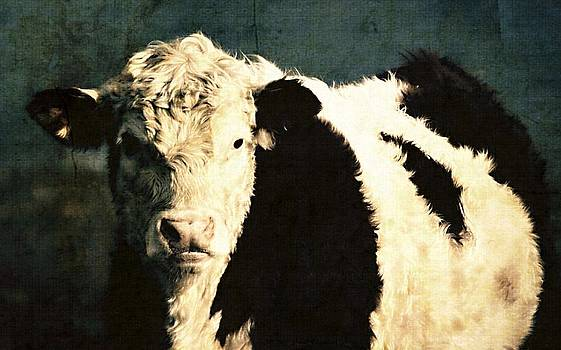 Cow with Blue background by Marysue Ryan