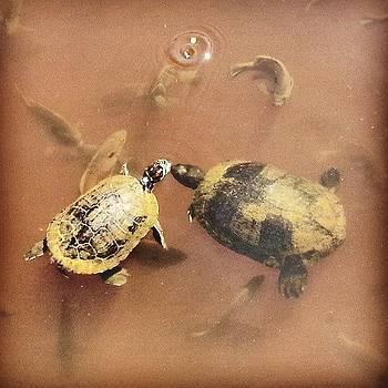 #cowabunga #turtlepower #turtles #fish by Philip Grant
