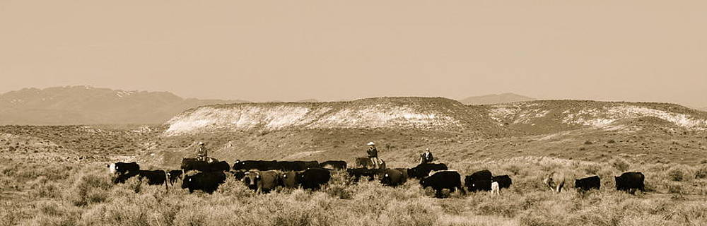 Cowboys Round Up Cattle Herd In Idaho By Brigette Hollenbeck