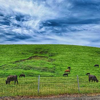 Cows and Clouds by Brian Maloney