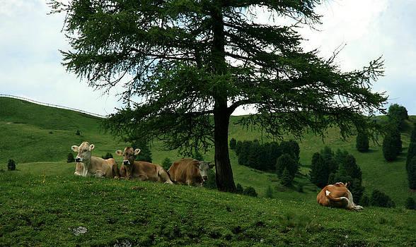 Cows on a Meadow by Leena Pekkalainen