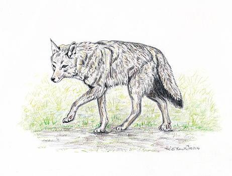 Coyote by Heidi Kunkel