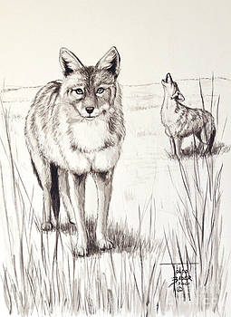 Art By - Ti   Tolpo Bader - Coyote Life