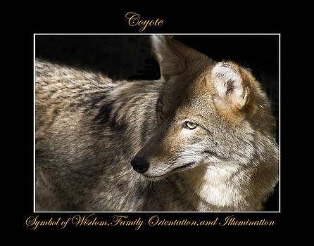 Coyote Symbol of by Marty Maynard