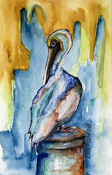 Cozumel Pelican  by Dale Bernard