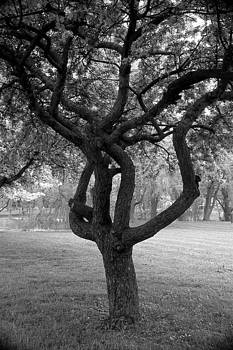 Crab Apple Tree B and W by Roger Soule