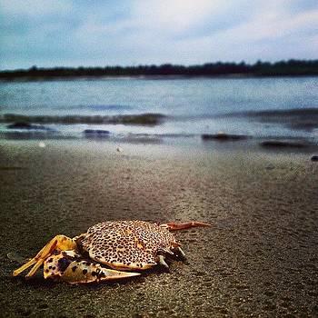 #crab #beach #water #rain #corsonsinlet by A Loving