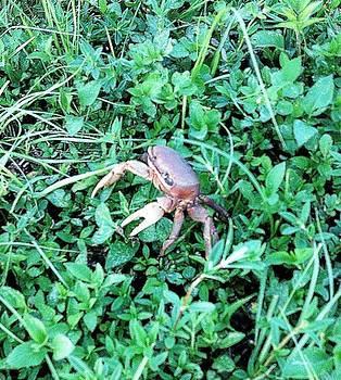 Crab Fort Lauderdale by Sierra Andrews