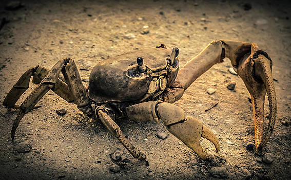 Crab by Kerry Hauser