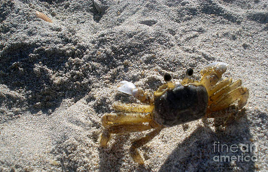 Crab on the Look-Out by Megan Dirsa-DuBois