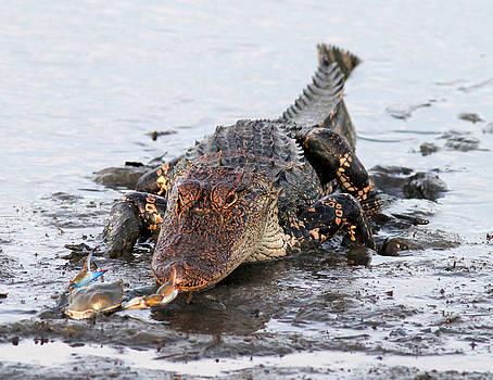 Crab vs. Alligator by Phil Lanoue