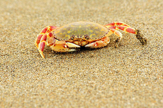 Crab walk by Rebecca Adams