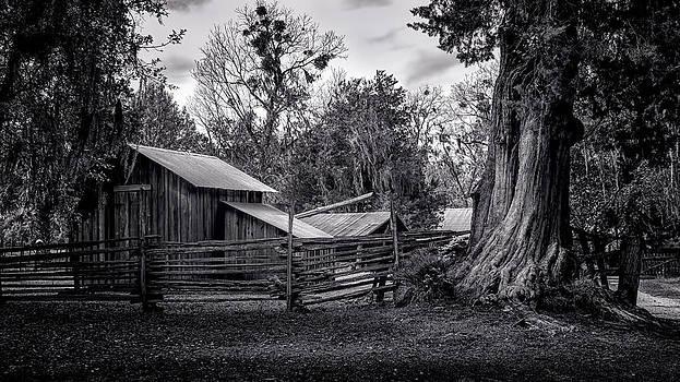 Lynn Palmer - Cracker Barn and Gnarled Southern Red Cedar