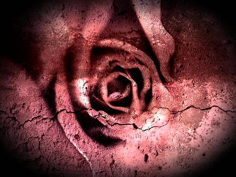 crackling Rose by  Jeff Mantz Rhodes