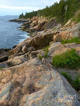 Christine Stack - Craggy Coast in Acadia National Park Maine