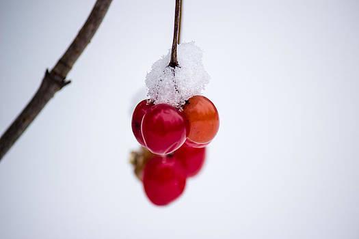 Cranberry reflection by Zane Giles