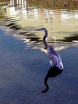 Crane- CityBird by Darren  Graves