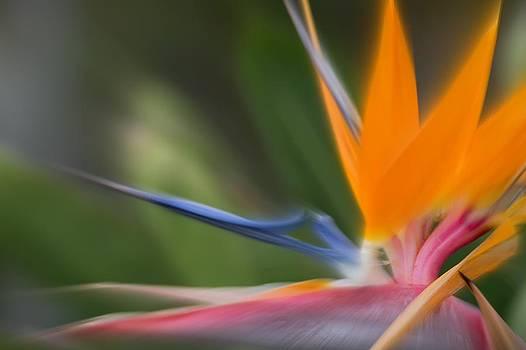 Crane Flower by Esther Branderhorst