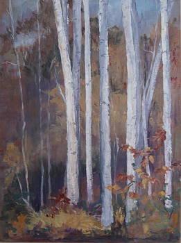 Crane Mountain Birches in the Sun  by Terri Messinger