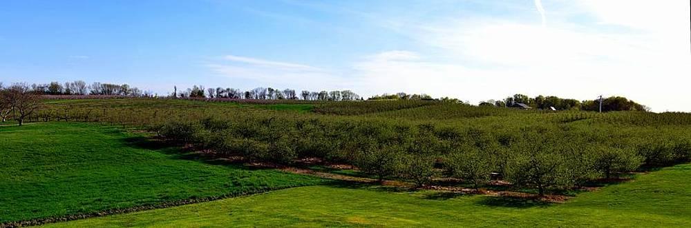 Michelle Calkins - Crane Orchards