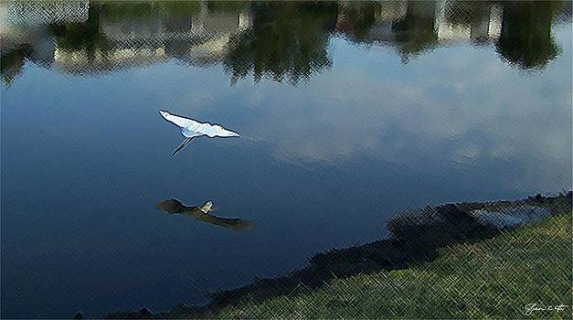 Crane Over Water  by Shawn Lyte