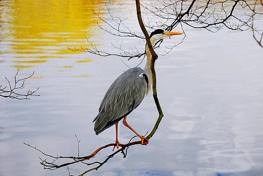 Crane Perching 2 by John Magnet Bell