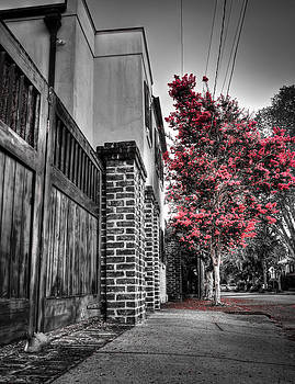 Crape Myrtles in Historic Downtown Charleston 2 by Andrew Crispi