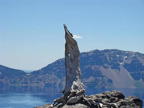 Baslee Troutman - Crater Lake Lightning Tree Art Prints Blue
