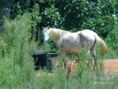 Cream Colored Horse by Eva Thomas