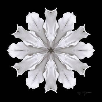 Creation by Karen Casey-Smith