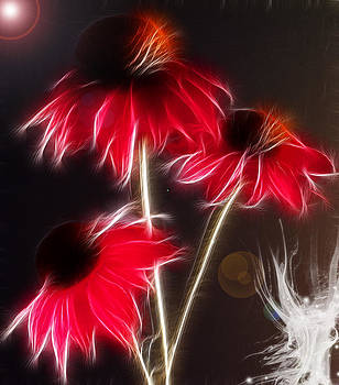 Creation by Patricia Motley