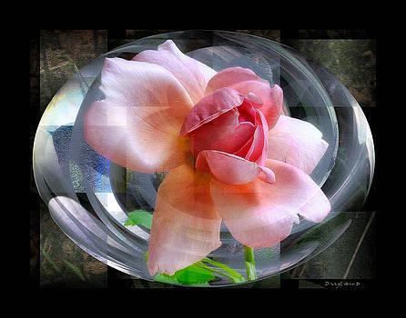 Creation - Peach Rose by Celia Durand