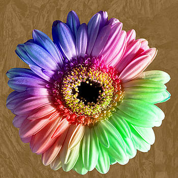 Creative bloom by Pete Hemington