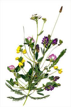 Irena Marta - Creative Flower