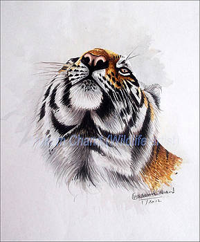 ''creative Tiger Face'' by Hukam Chand Wildlife artist