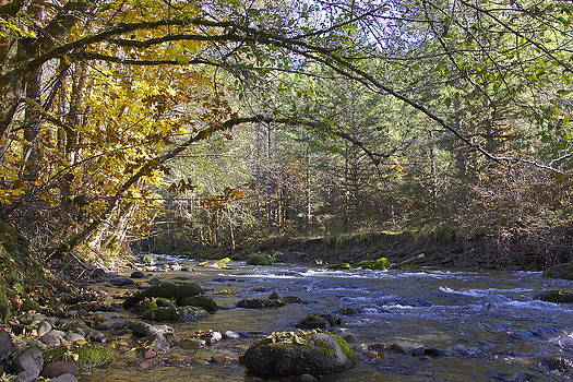 Creek at Autumn by Tim Rice