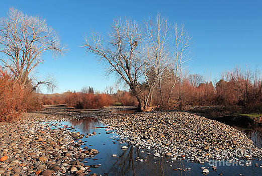 Creek bed by David Taylor