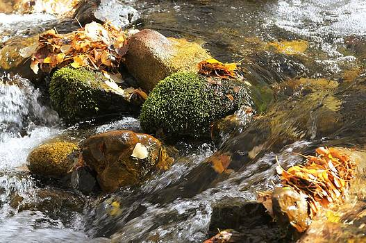 Creek Closeup by David Winge