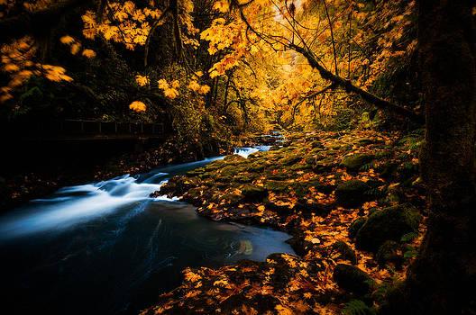 Creek in Autumn by Brian Bonham