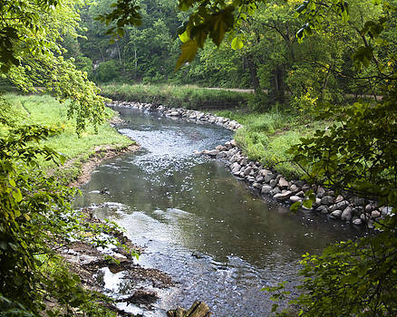 Creek in Morning by Kate Johnson
