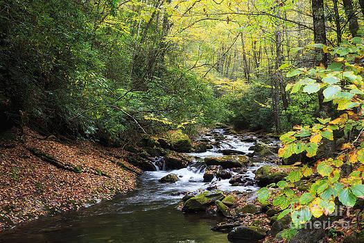 Jill Lang - Creek in the Woods
