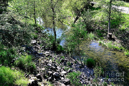 Creek by Jackie Carr