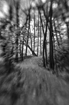 Creepy path by Shawn Wood