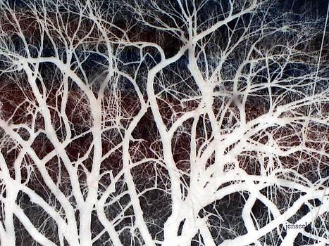 Creepy Tree by Jen Seel