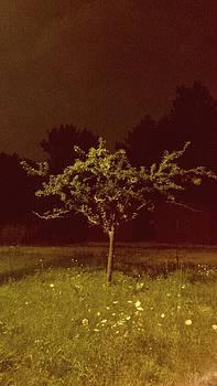 Creepy Tree by Ted Mahy