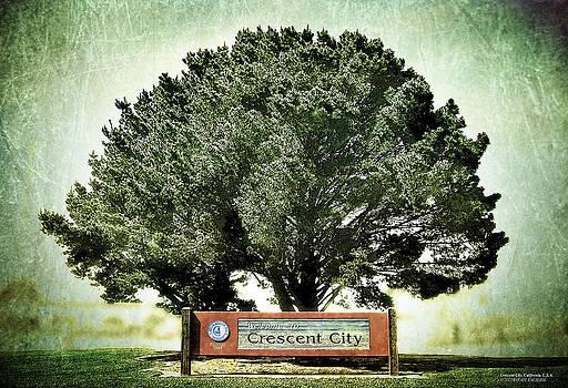Crescent City Tree by Rafael Escalios