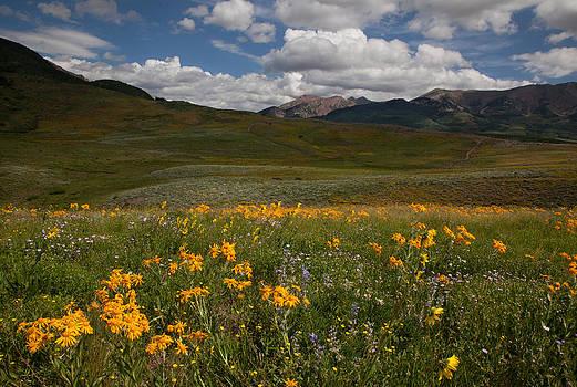 Susan Rovira - Crested Butte Bloom